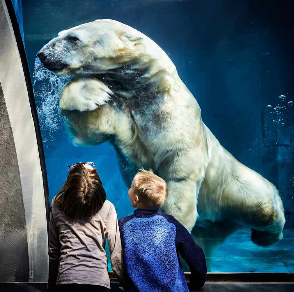 A white bear in a water tank in front of two kids